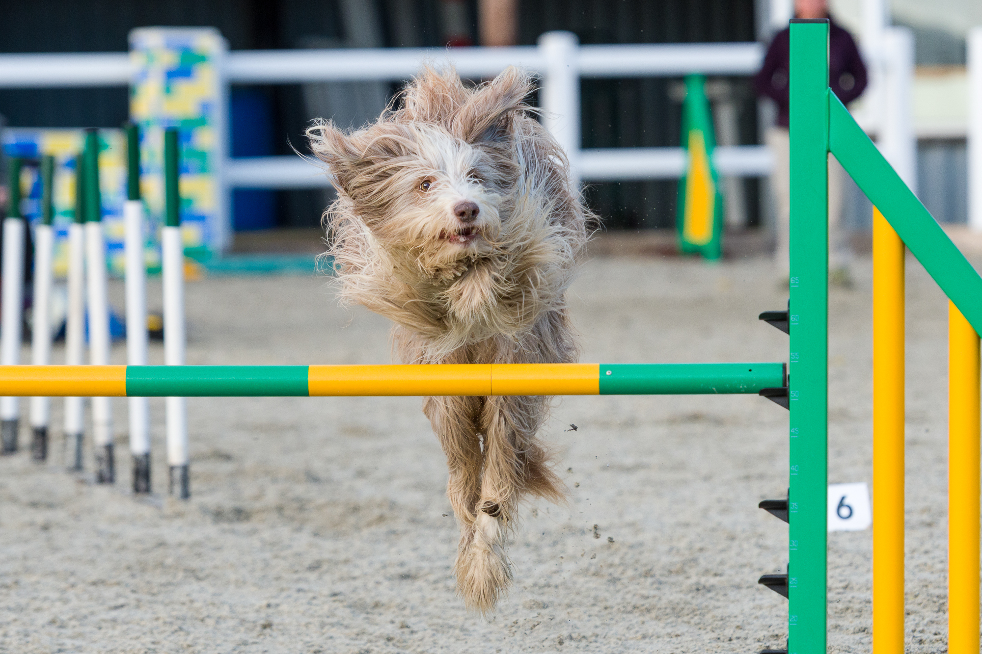 Enter and compete with UK Agility